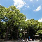 夏の明治神宮