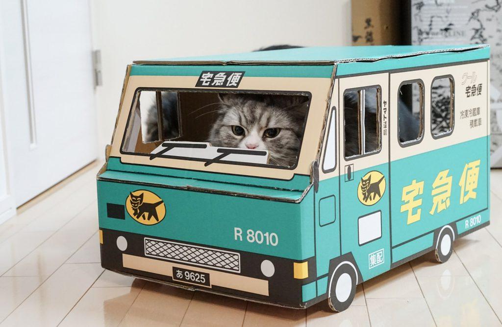 荷物お届けにあがりました(猫)