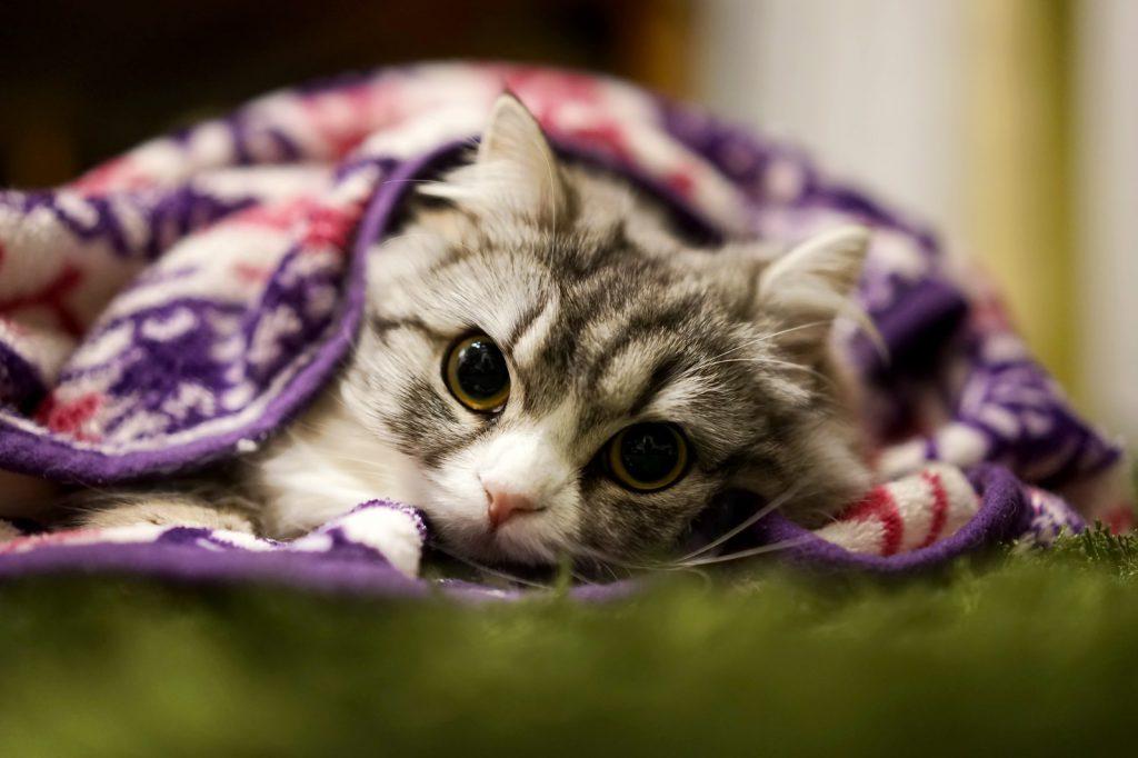 ブラケットにくるまる猫