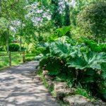 植物と遊歩道