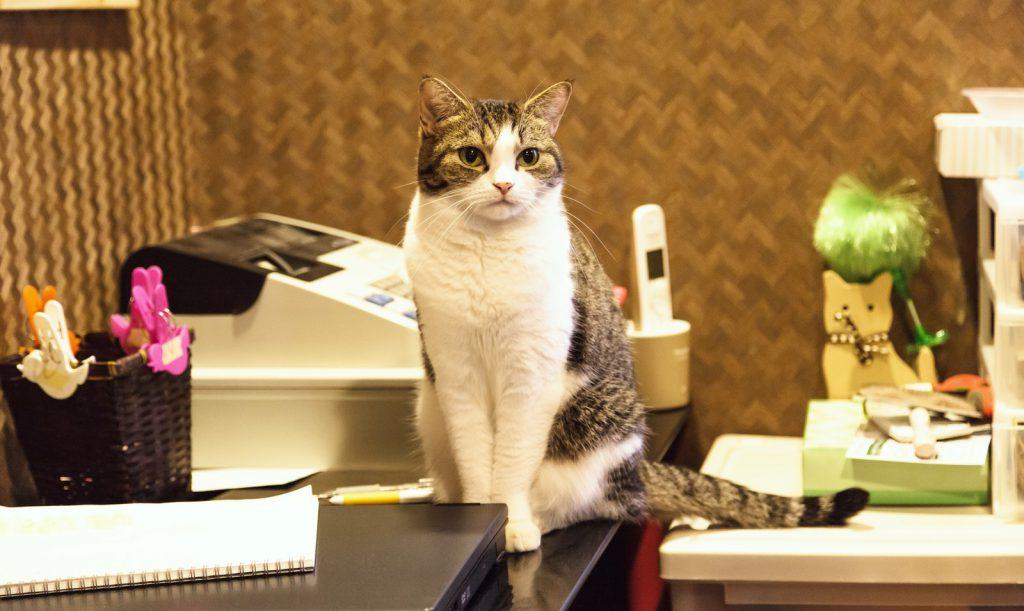レジカウンターで店番する猫