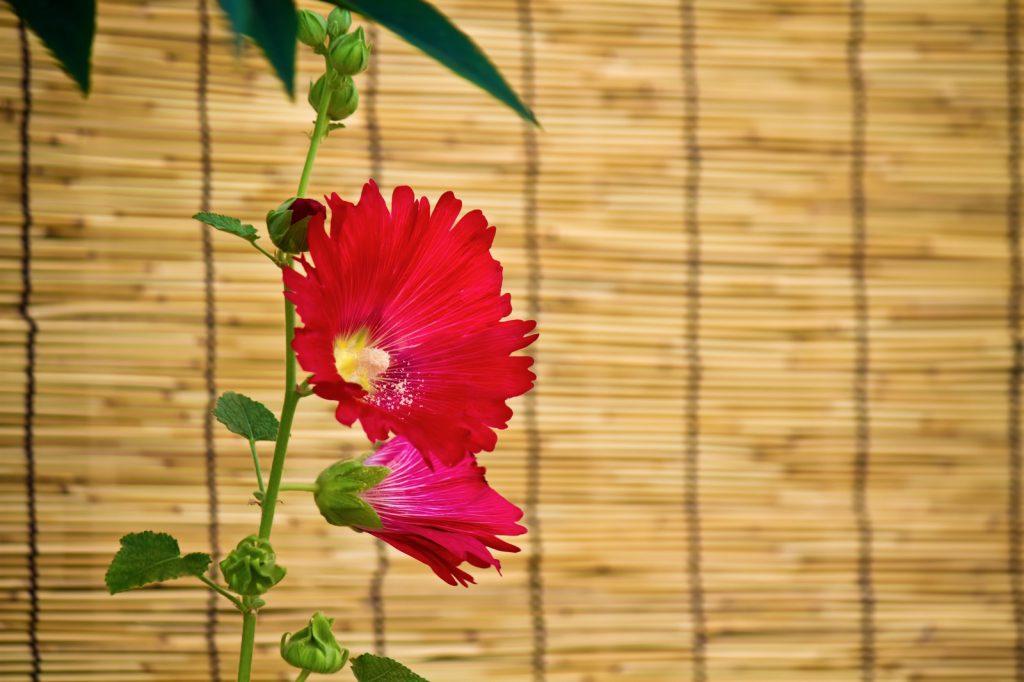 すだれと赤い花