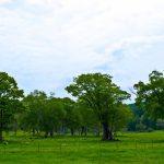 高原の森林
