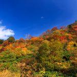 紅葉と秋の青空